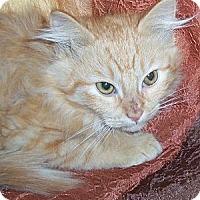Adopt A Pet :: Koda - Ennis, TX