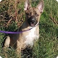 Adopt A Pet :: Angus - Portland, ME