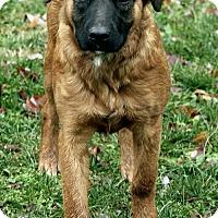 Adopt A Pet :: Zoe - Brattleboro, VT