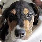 Adopt A Pet :: Samuel Adams