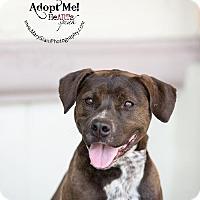 Adopt A Pet :: Amira - Rancho Santa Margarita, CA