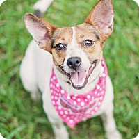 Adopt A Pet :: Lulu - Adoption Pending - Kingwood, TX