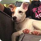 Adopt A Pet :: Baby Anniston (Adoption Pending)