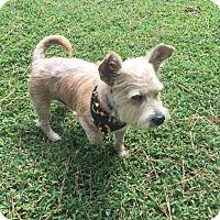 Adopt A Pet :: Baxter - Hampton, VA