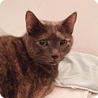 Adopt A Pet :: Marguerite - New York, NY