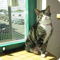 Adopt A Pet :: Monet - Lakewood, CO