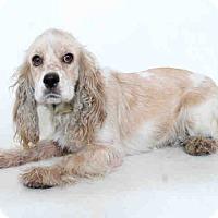 Adopt A Pet :: Mia - Santa Barbara, CA