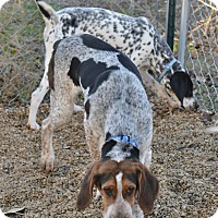 Adopt A Pet :: Baxter - Meridian, ID