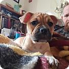 Adopt A Pet :: Emma