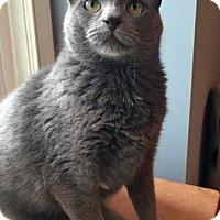 Adopt A Pet :: Aries - Merrifield, VA