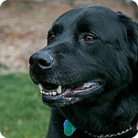 Adopt A Pet :: Vladdy - Seattle, WA
