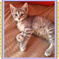 Adopt A Pet :: Lilac - Mt. Prospect, IL