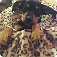 Adopt A Pet :: Minnie - Tampa, FL