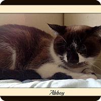 Adopt A Pet :: Abbey - Tombstone, AZ