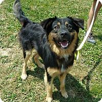 Adopt A Pet :: Rupert - Lisbon, OH