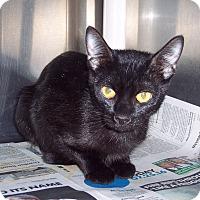 Adopt A Pet :: Saphire - Olivet, MI