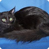Adopt A Pet :: Scottie - Colorado Springs, CO