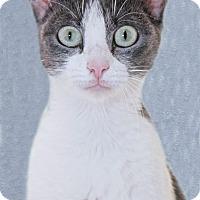 Adopt A Pet :: Ziwi - Encinitas, CA