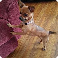 Adopt A Pet :: Gloria - Maple Grove, MN
