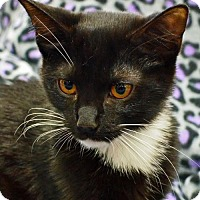 Adopt A Pet :: Trixie - Morgantown, WV