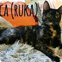 Adopt A Pet :: REBECCA (RUKA) - Glendale, AZ