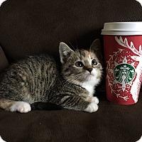 Adopt A Pet :: Peppermint Mocha - Newport, KY