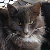 Adopt A Pet :: Sissy - San Jose, CA