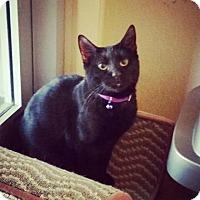 Adopt A Pet :: Aurora - Fredericksburg, TX