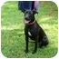Photo 1 - Boxer/Labrador Retriever Mix Dog for adoption in Kingwood, Texas - Jewel