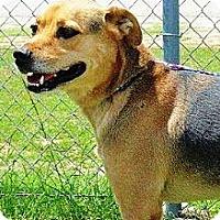 Adopt A Pet :: Tyrod - Vidor, TX