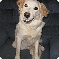Adopt A Pet :: Cory - Golden Valley, AZ