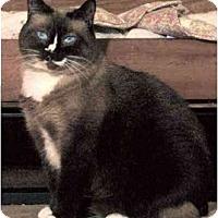 Adopt A Pet :: Vienna - Davis, CA