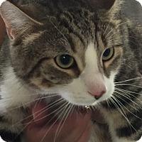 Adopt A Pet :: Puffin - Winchendon, MA
