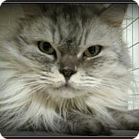 Adopt A Pet :: Glitter - Gilbert, AZ