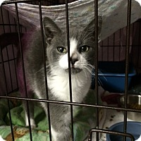 Adopt A Pet :: Martin - Byron Center, MI