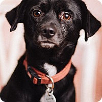 Adopt A Pet :: Prometheus - Portland, OR