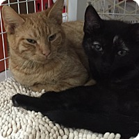 Adopt A Pet :: Little Red - East Meadow, NY