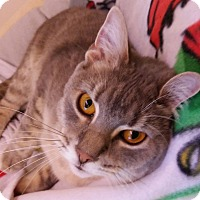 Adopt A Pet :: Junie $10 - Brimfield, MA