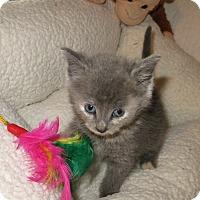 Adopt A Pet :: Rainbow - Geneseo, IL