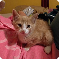 Adopt A Pet :: Palmer - Sparta, NJ