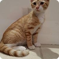 Adopt A Pet :: Gruff - Elyria, OH