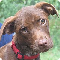 Adopt A Pet :: Magnolia - Washington, DC