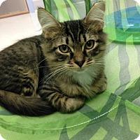Adopt A Pet :: Huck - Oyster Bay, NY