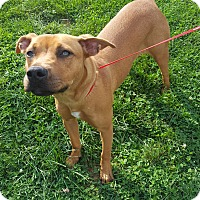 Adopt A Pet :: Lady - Franklin, IN