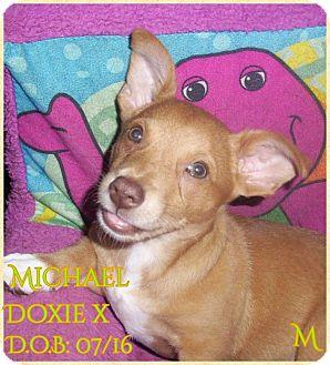 Dachshund Mix Puppy for adoption in DeForest, Wisconsin - Michael