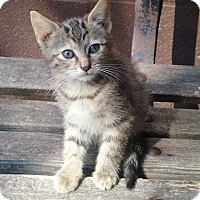 Adopt A Pet :: Clover - Mt Pleasant, PA