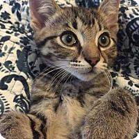 Adopt A Pet :: Thor - ROSENBERG, TX