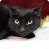 Adopt A Pet :: Maxine - $25! - Midland, MI