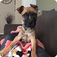 Adopt A Pet :: Rory - oklahoma city, OK