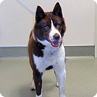 Adopt A Pet :: 334826 - Wildomar, CA